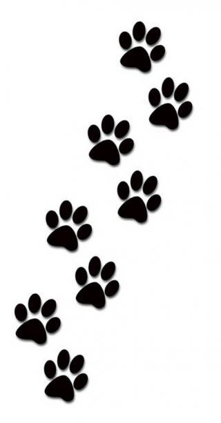dog paw tracks